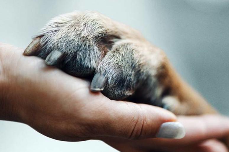 """""""Amigos Caninos"""", la docu-serie en Netflix con 6 historias de amor incondicional deperritos"""